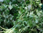 Cilantro – Man's Oldest Herb a Must-Have Ingredient in Vietnamese Pho